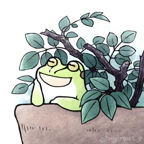croaking frog 20170516